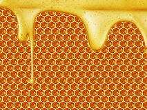 Goteo de la miel en fondo del panal Imagen de archivo libre de regalías
