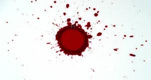 Goteo de la sangre contra el fondo blanco, almacen de metraje de vídeo