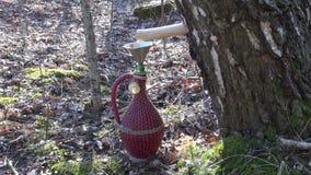 Goteo de la savia del árbol de abedul en un jarro decorativo a través de la clavija de madera almacen de metraje de vídeo