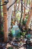 Goteo de la savia del abedul en el tarro Sibir, Yugra Foto de archivo libre de regalías
