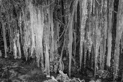 Goteo del agua helada en la pequeña corriente del río monocromática imagenes de archivo