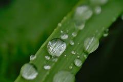 Goteos del agua en un tallo de la hierba fotos de archivo