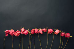 Goth style dry roses, black background. With copy-space stock photo