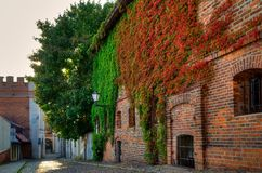 Gothic building overgrown with ivy, old town in Torun, Poland. Gothic building overgrown with ivy, old town in Torun. One of the medieval monuments in Old Town Royalty Free Stock Image