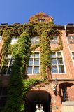 Gothic building overgrown with ivy, old town in Torun, Poland. Royalty Free Stock Photos