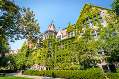 Gothic Buildings. At Chicago University royalty free stock photo