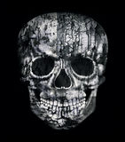 Gothic Human Skull in Black and White Royalty Free Stock Images