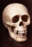 Gothic Skull. Royalty Free Stock Photography