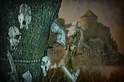 Gothic skulls on a background an old fortress Royalty Free Stock Photo