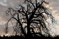 Gothic tree Royalty Free Stock Images