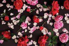 Gothic wallpaper. Postcard for valentine`s day. Rose flower pattern on black background. Red summer flowers with green leaves. Stock Photo