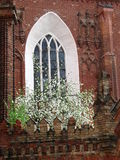 Gothic window. Detail of Bernardine church in Vilnius. Built at the end of 15th century in the Gothic style. Gothic window with blooming apple-tree stock photo