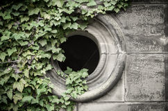 Gothic window with ivyberry Stock Image