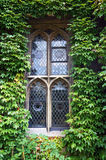 Gothic window overgrown with green ivy Stock Photography
