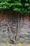 Gotische Wand mit einem Baum Stockfotografie