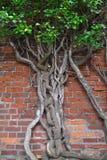 Gotisches Äußeres mit Wachsen-in Baum Stockbilder