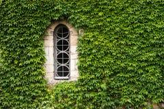 Gotisches Fenster des Efeus Stockfotografie