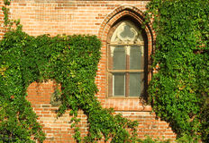 Gotisches Fenster und Efeu Lizenzfreie Stockfotos