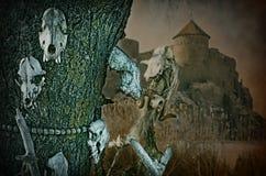 Gotiska skallar på en bakgrund en gammal fästning royaltyfri foto