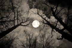 Gotiskt nattlandskap i sepiasignaler Fotografering för Bildbyråer
