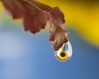 Gotita de agua del girasol Fotografía de archivo libre de regalías