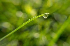 Gotita de agua en la cuchilla de la hierba Imagen de archivo libre de regalías