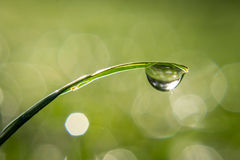 Gotita de agua en las cuchillas de la hierba Foto de archivo