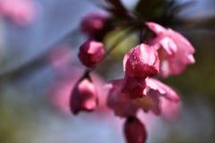 Gotita rosada de la flor Fotos de archivo libres de regalías
