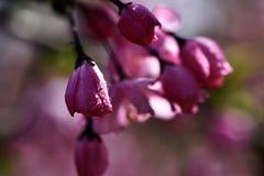 Gotita rosada de la flor Fotos de archivo