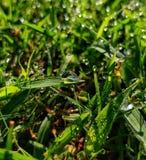 Gotitas de agua con el fondo herboso verde fotografía de archivo