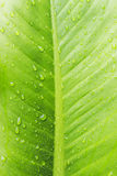 Gotitas de agua del primer en las hojas Imagen de archivo libre de regalías