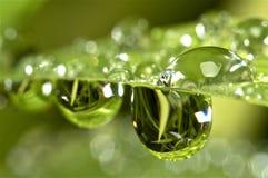 Gotitas de agua en hierba verde Fotos de archivo libres de regalías