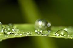 Gotitas de agua en hierba verde Fotografía de archivo libre de regalías