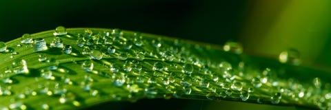 Gotitas de agua en hierba imagenes de archivo