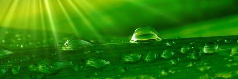Gotitas de agua en hierba foto de archivo