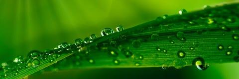 Gotitas de agua en hierba imágenes de archivo libres de regalías