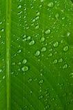 Gotitas de agua en la hoja verde Fotos de archivo