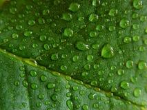 Gotitas de agua en la hoja verde Fotos de archivo libres de regalías