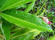 Gotitas de agua en las hojas de una planta fotos de archivo libres de regalías