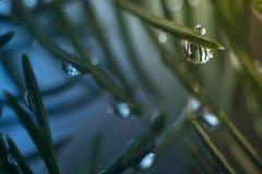 Gotitas de agua en rama de árbol de navidad Imagen de archivo