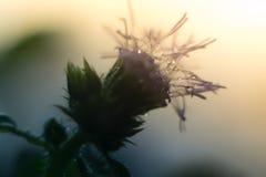 Gotitas de agua en una flor púrpura en la luz del sol Fotos de archivo