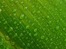 Gotitas de agua, hoja verde Foto de archivo libre de regalías