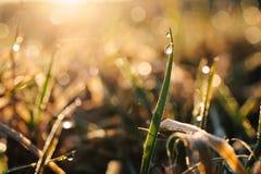 Gotitas de la chispa del agua en la luz del sol en una cuchilla de la hierba en naturaleza en primavera fotografía de archivo