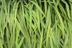Gotitas del agua de lluvia en las hojas verdes Imagen de archivo libre de regalías