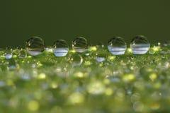 Gotitas en la lámina de la hierba - macro del rocío Foto de archivo libre de regalías