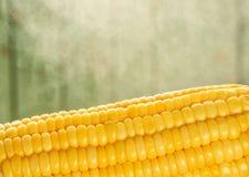 Gotowana kukurudza z parowym zbliżeniem na zielonym tle obraz stock