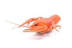 gotowani crayfish Fotografia Stock