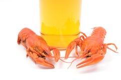 gotowani crayfish Zdjęcie Stock