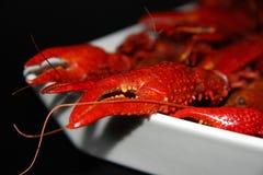 gotowani crayfish Obraz Royalty Free