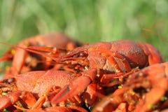 gotowani crayfish obrazy stock